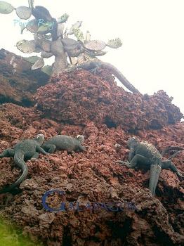 登るイグアナのコピー.jpg