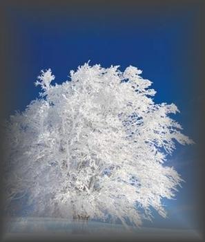 白い樹wakusig.jpg